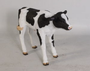 Calf New Born (JR 120076)