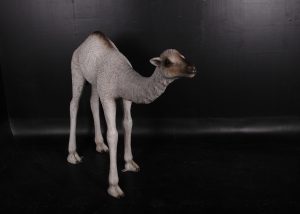 Dromedary Camel Calf 5ft (JR 130008)