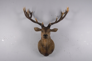 Grand Stag Head Wall Decor -JR 170216