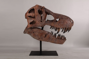 Great dino head - JR 180150