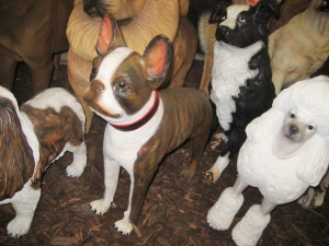 Boston Terrier (JR 3034)