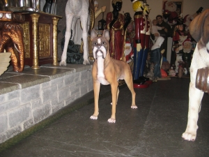 Boxer Dog (JR 2936)