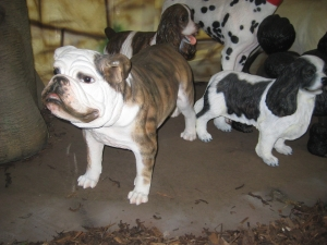 Bulldog 3 (JR 2953)