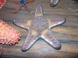 Chocco Chip Starfish (JR R-204)