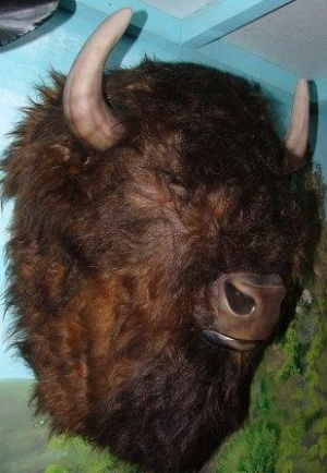 Buffalo Head Furry (JR 2075)