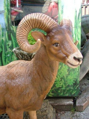 Mountain Ram life-size (JR 2339)