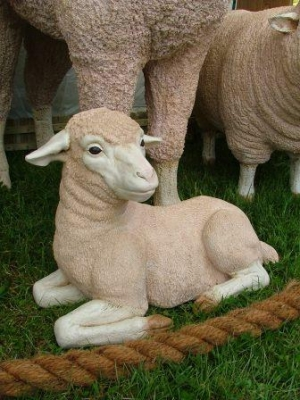 Merino Lamb - Lying (JR 020502)