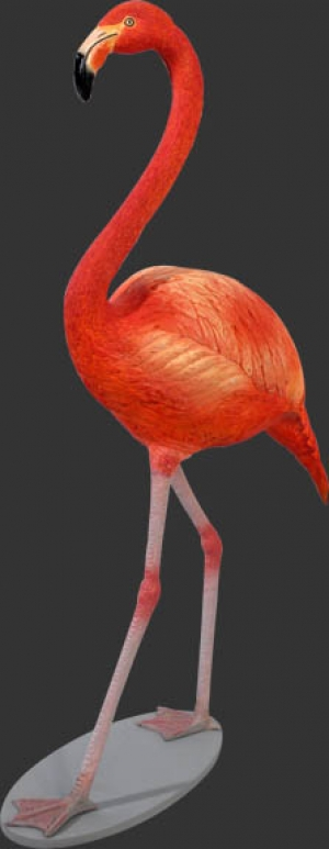 Flamingo (JR 110038)