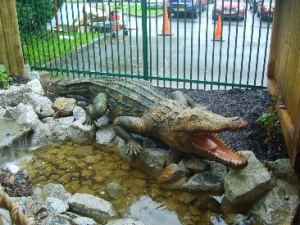 Crocodile 10ft long JR 2192