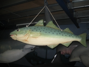 Hanging Salmon (JR AFHAS)