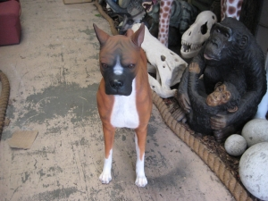 Boxer Dog (JR 110120)
