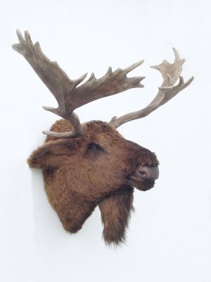 Moose Head (Furry) (JR 2076)
