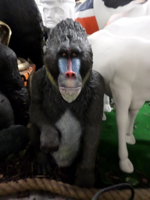 Mandrill Sitting (JR 140094)