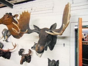 Moose Head (JR 180023)
