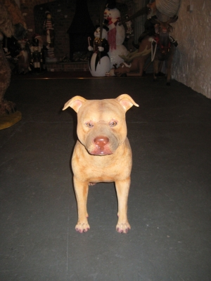 Pit Bull - Adult Female (JR 120055)