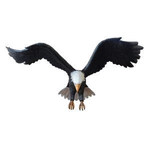 EAGLE - WINGS UP - JR R-181