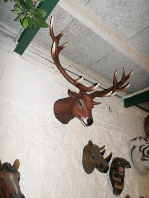 Red Deer Head Stag (JR 130095)