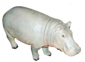 Hippo - Young (JR R-003)