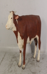 Hereford Steer (JR 080125)  - Thumbnail 01