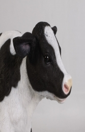 Calf New Born (JR 120076) - Thumbnail 02