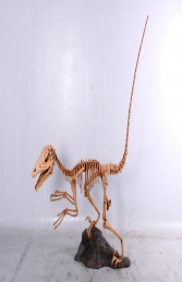 Deinonychus Skeleton (JR 140026)