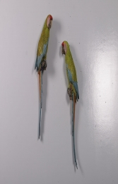 Buffons Macaw set of 2 JR 190152