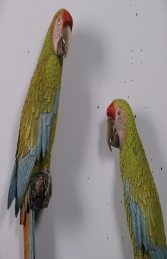 Buffons Macaw set of 2 JR 190152 - Thumbnail 02