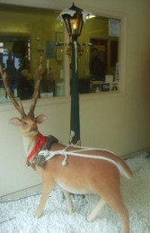 Reindeer with Long horns life-size model (JR 1558) - Thumbnail 01