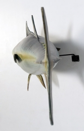 Bluefin Tuna (JR 120054) - Thumbnail 03