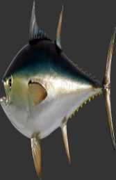Bluefin Tuna (JR 120054)
