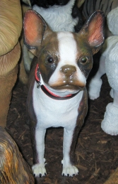 Boston Terrier (JR 3034) - Thumbnail 02