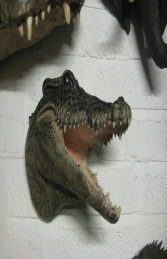 Crocodile Head (JR DD88106A) - Thumbnail 01