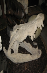 Crocodile Skull (JR 100506RS)