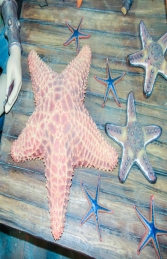 Cushion Starfish (JR R-025) - Thumbnail 02