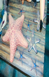 Cushion Starfish (JR R-025) - Thumbnail 03