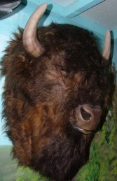 Buffalo Head Furry (JR 2075) - Thumbnail 01