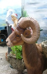 Mountain Ram life-size (JR 2339) - Thumbnail 02
