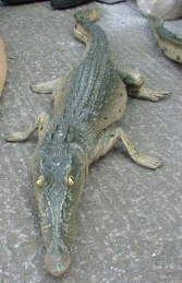 Crocodile Resting 4ft long (JR 080111)