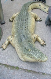 Crocodile 2.2m Adult (JR 080123)