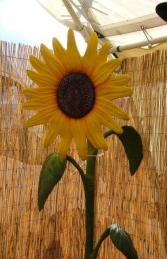Sunflower 7ft (JR 1804)    - Thumbnail 02