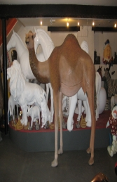 Dromedary Camel 7ft (JR 130007) - Thumbnail 01