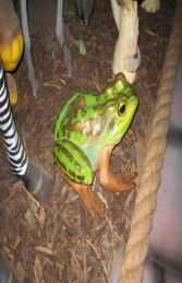 Green and Golden Bell Frog (JR 100003) - Thumbnail 03