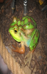 Green and Golden Bell Frog (JR 100003) - Thumbnail 01