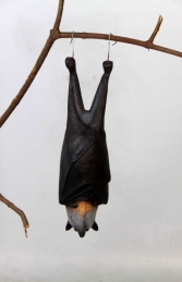 Bat - Grey Headed Flying Fox (JR 100120) - Thumbnail 01