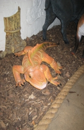 Iguana 3ft Long - Orange (JR 2160-O)