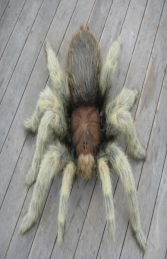 Tarantula Hairy 3ft (JR FSC1172H) - Thumbnail 01