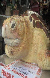 Loggerhead Turtle  (JR 090048)
