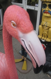 Flamingo (JR 2610)