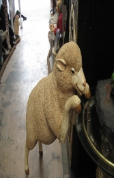 Merino Sheep - Curious (JR 110047) - Thumbnail 01