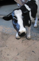 Mini Cow - Friesian (JR 090056)	 - Thumbnail 02